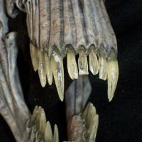 Alien Queen Skull